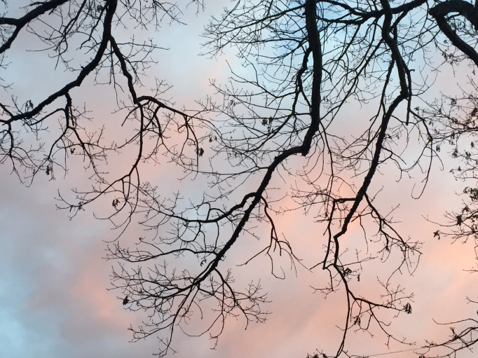a pale blue and pink sunset sky, framed by bare tree limbs