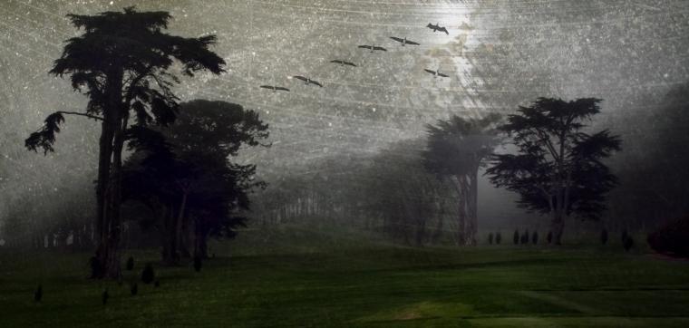 grungy foggy golf course